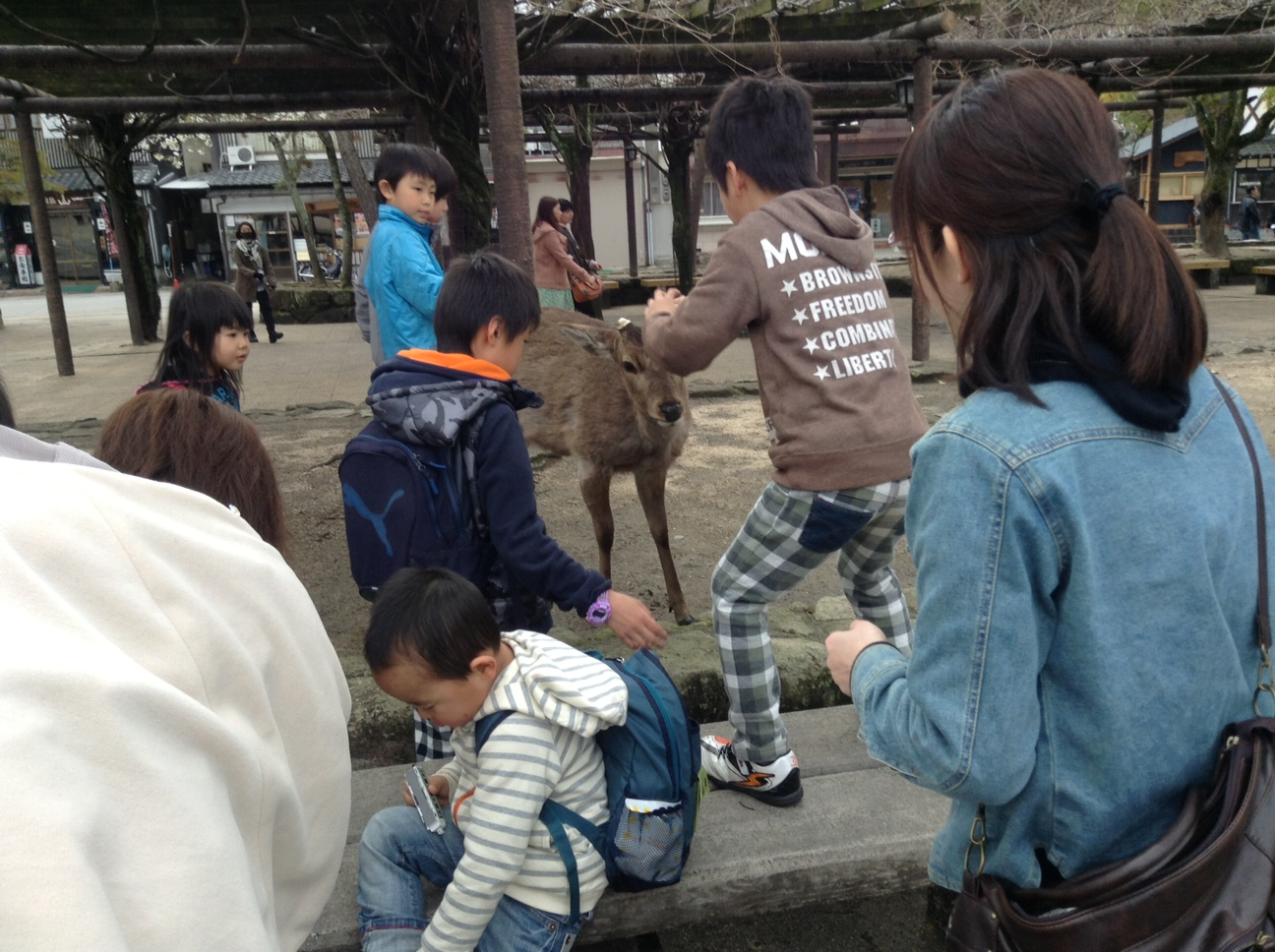 宮島で。鹿だ!