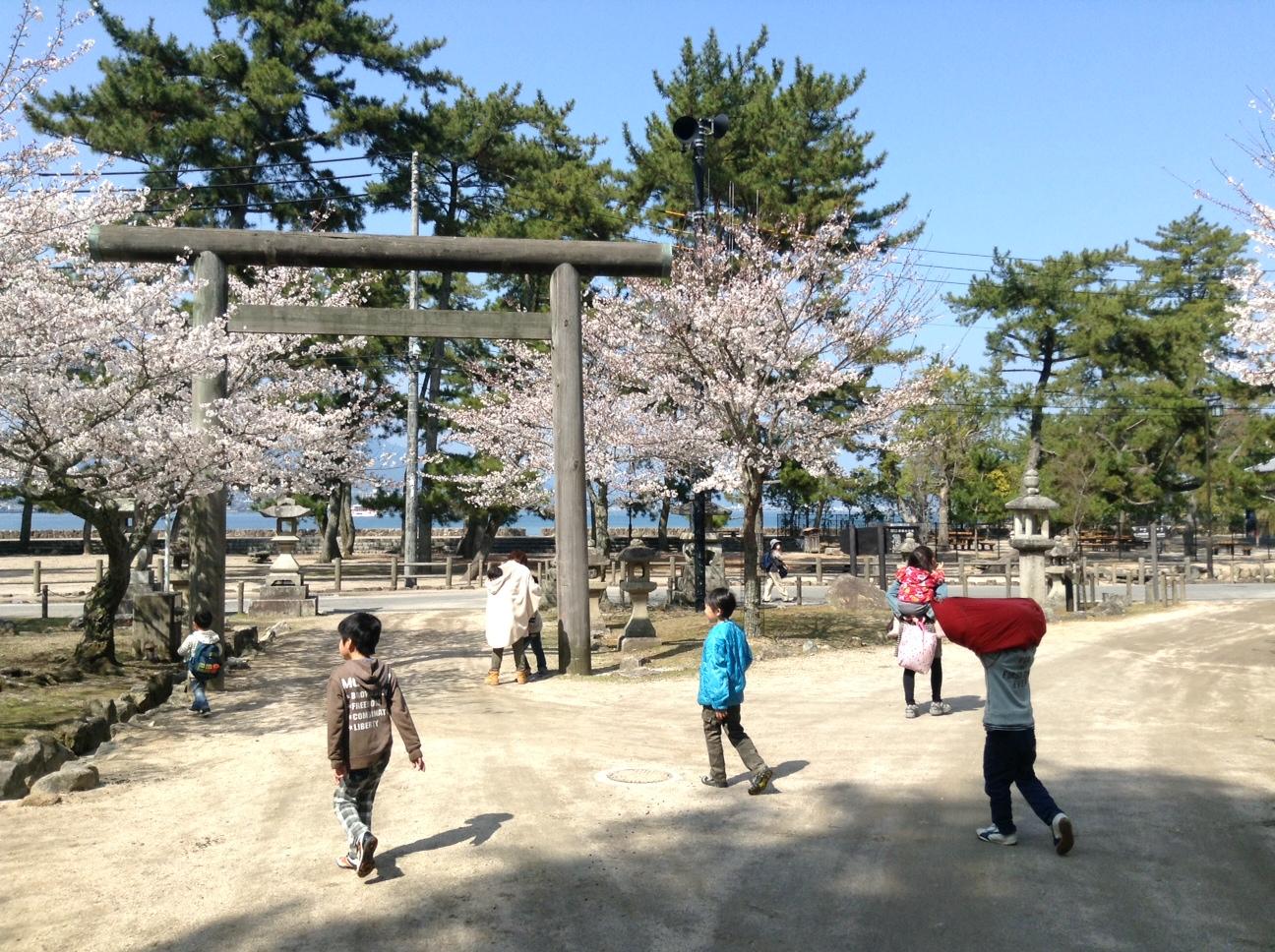 桜の下を。